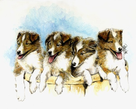 Heather's Shelties ~ watercolour by Patrice