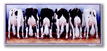 Cow Butts ~ Watercolour by Patrice