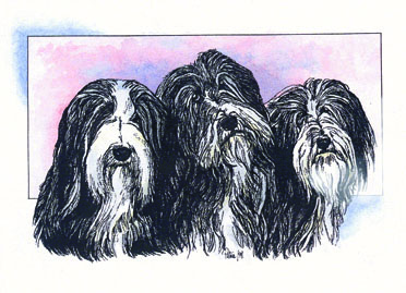 Three Bearded Ladies ~ watercolour by Patrice