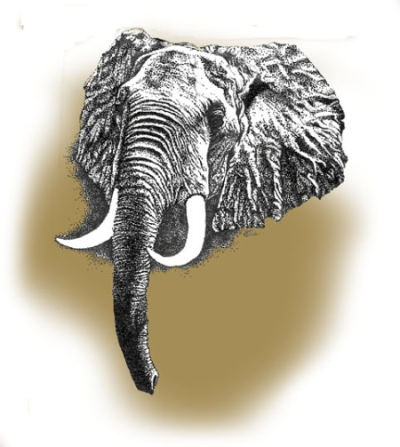 Elephant ~ Illustration by Patrice
