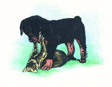 Rottie Pup and Kitten ~ illustration by Patrice
