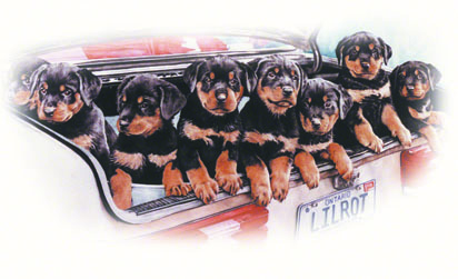 Rottie Pups ~ painting by Patrice