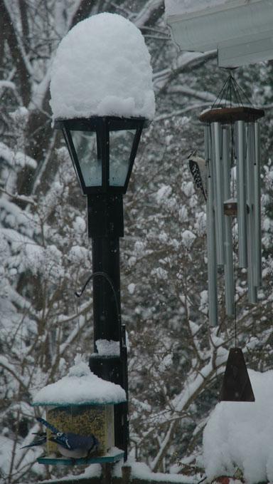 Snow Falls Light ~ Photo by Patrice