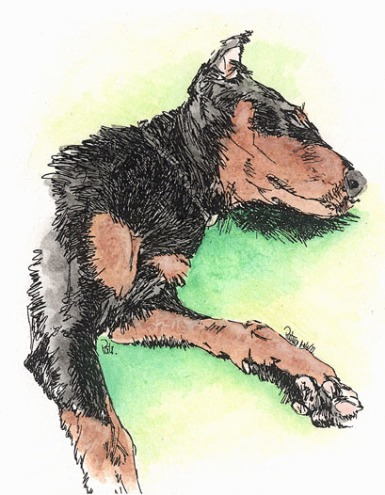 Dobie pup ~ Drawing by Patrice