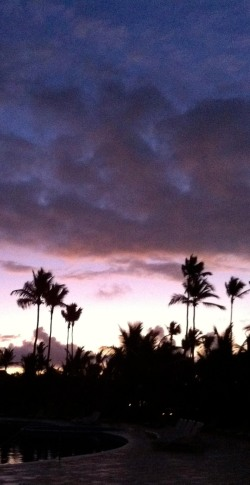 Palm Tress in the Sunset ~Photo by Patrice