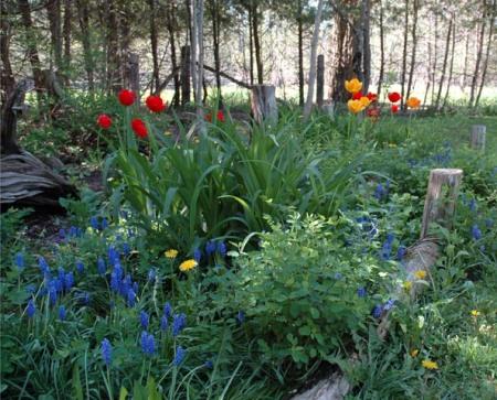 Spring Garden ~ Photo by Patrice