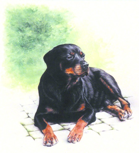 German Rottweiler Bitch ~ Painting by Patrice