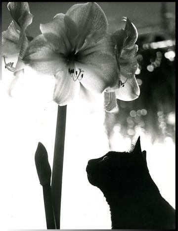 Remember Benji ~ photo by Patrice