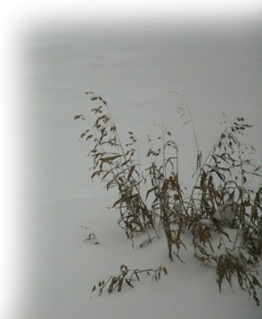 Grass in Winter ~ photo by Patrice