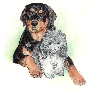 Teddy and Nickie ~ Illustration by Patrice