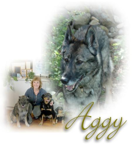 Our Aggy