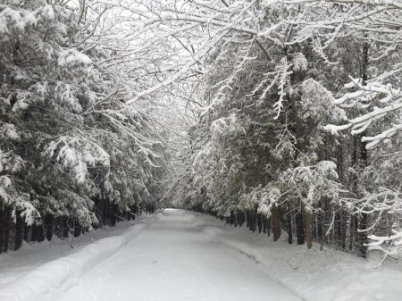 Winter's Lane ~ Photo by Patrice