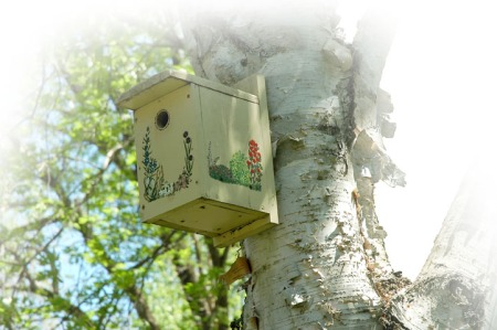 Birdhouse in a birch tree ~ photo by Patrice