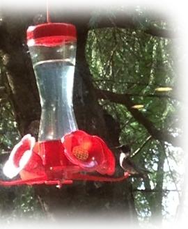 Hummingbird ~ photo by Patrice