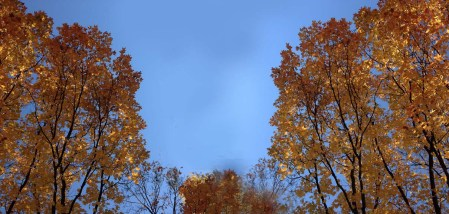 Fall Leaves ~ Photo by Patrice