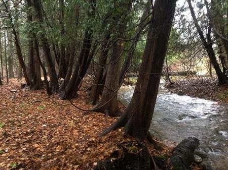 Fall Rain ~ Photo by Patrice