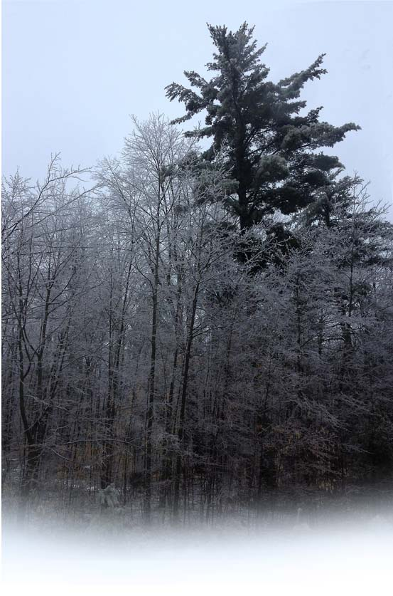 Freezing Rain ~ photo by Patrice