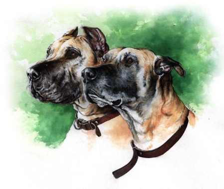 Great Danes from Purina's Hall of Fame ~ Watercolour by Patrice