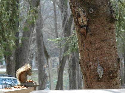 Seeds, Tree and Squirrel ~ Photo by Patrice