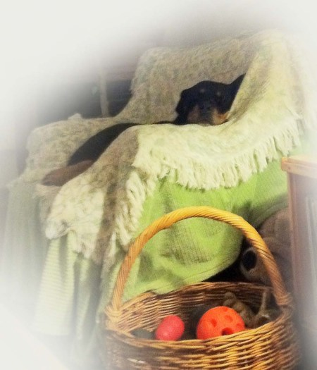 Ursa in her chair ~ Photo by Patrice