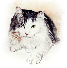 Longhaired Kitty ~ Watercolour Painting by Patrice