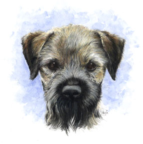 Vince's Border terrier ~ Watercolour Art by Patrice