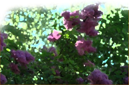 Lilac Blossoms _ Photo by Patrice