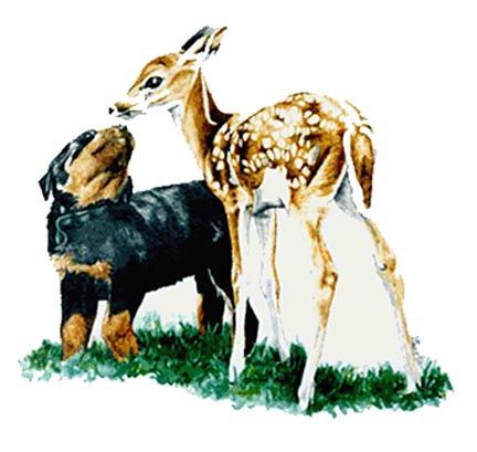 Rotti Pup and Fawn ~ Watercolour Illustration by Patrice