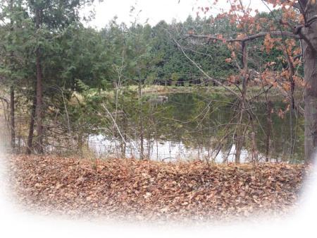 Quiet Pond - Photo by Patrice