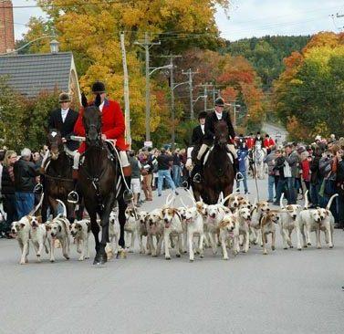 Fox Hound Parade ~ Photo by Patrice