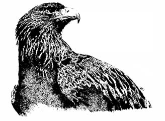 Eagle ~ Stipple Art by Patrice for B.C. Central Credit Union