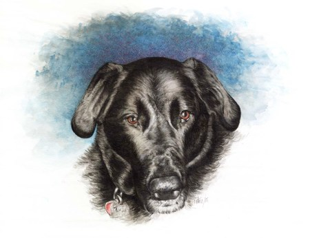 Shelby Painting ~ Watercolour Art by Patrice