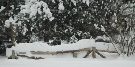 Snowfall ~ Photo by Patrice
