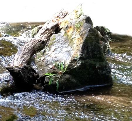 Fern in Rock ~ Photo by Patrice