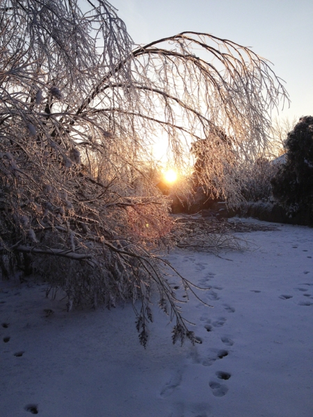 Ice Storm ~ 2016 Photo by Patrice