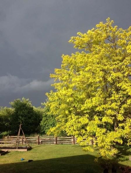 Tree and Dark Sky ~ Photo by Patrice
