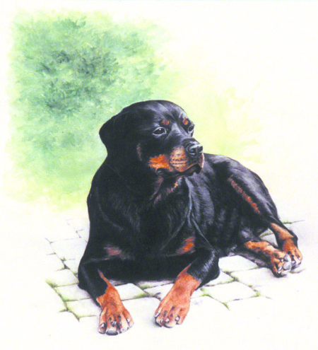 German Rottie ~ Painting by Patrice