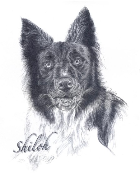 Shiloh ~ Pencil Art by Patrice