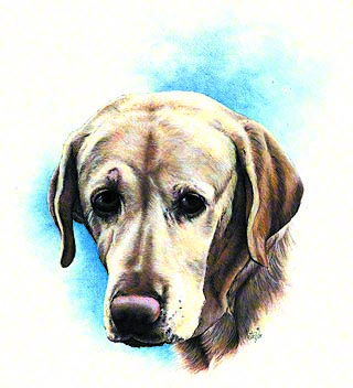 Connie's Yellow Lab ~ Watercolour by Patrice