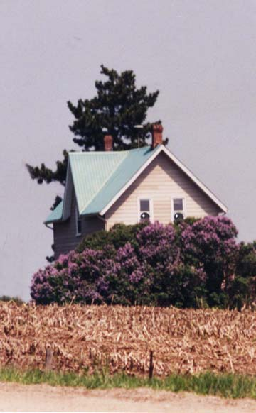 Farmhouse Face and Lilacs ~ Photo by Patrice