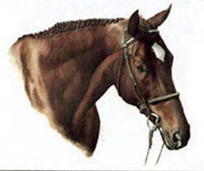 Dave's Horse  ~ illustration by Patrice