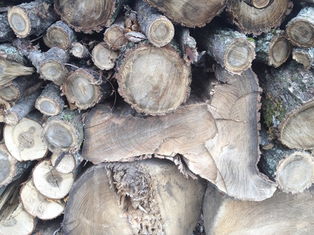 Pile of Wood ~ Photo by Patrice