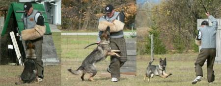 Schutzhund 02 ~ Aggy