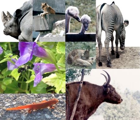 Animal Collection ~ Photos by Patrice