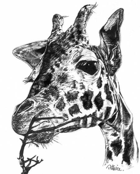 Giraffe ~ Stipple art by Patrice