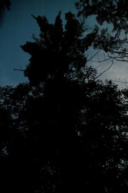 Dark Night Tree ~ Photo by Patrice