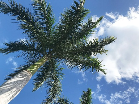 Palm Tree in Blue Sky ~ Photo by Patrice