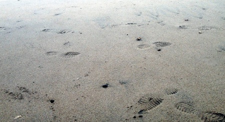 Footprints In the Sand ~ Photo by Patrice