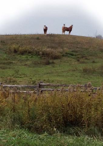 Horses on the hill ~ Photo by Patrice