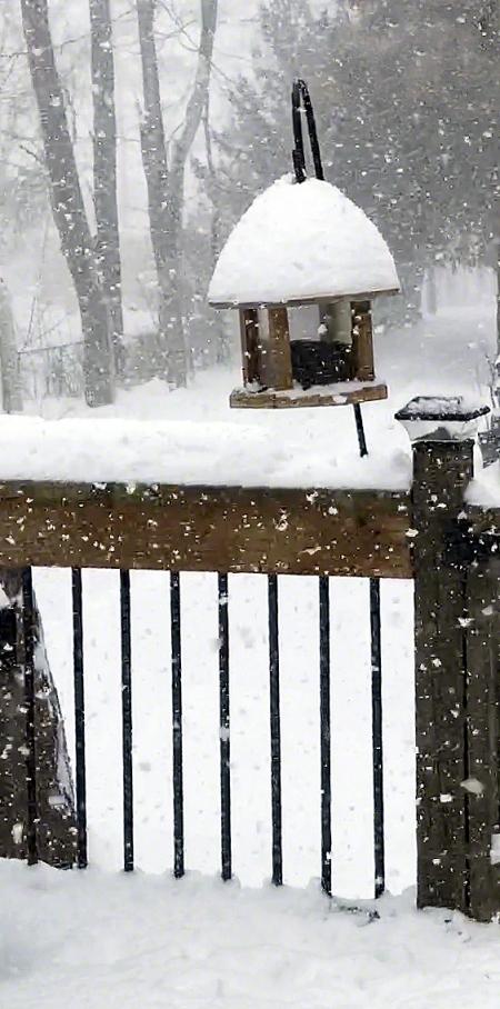 Snow falling on bird feeder ~ Photo by Patrice